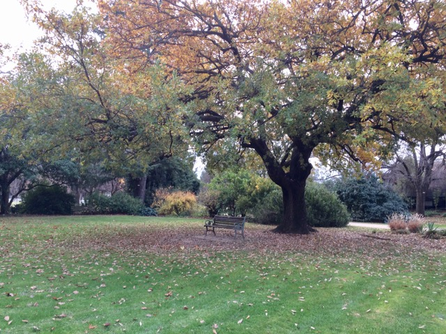 Botanical gardens, FullSizeRender 8