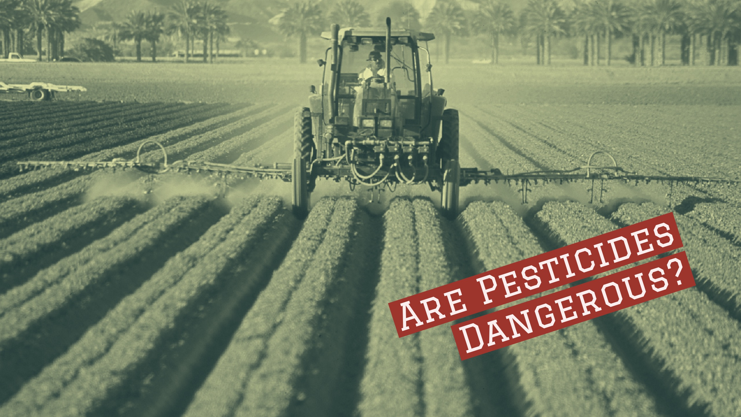 A tractor sprays many rows of crops with a pesticide - a text overlay says 'are pesticides dangerous?'